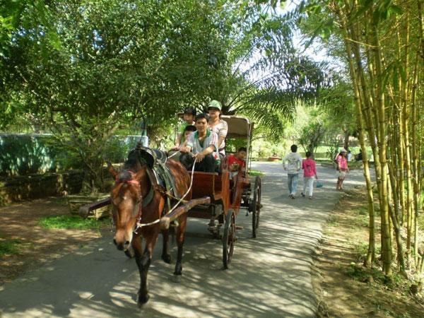 Bạn có thể đi xe ngựa để tham quan rất thú vị
